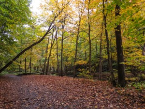 National Trails Day @ Starved Rock State Park | Oglesby | Illinois | United States